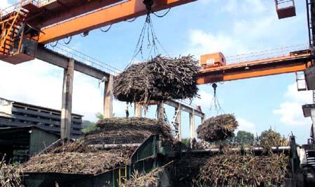To solve supply glut no new sugarcane plants until 2020