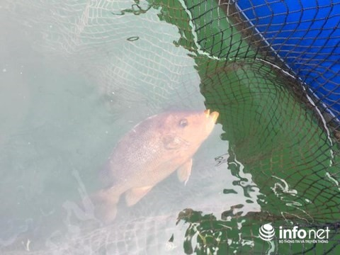 Mass fish deaths reported near Formosa plant
