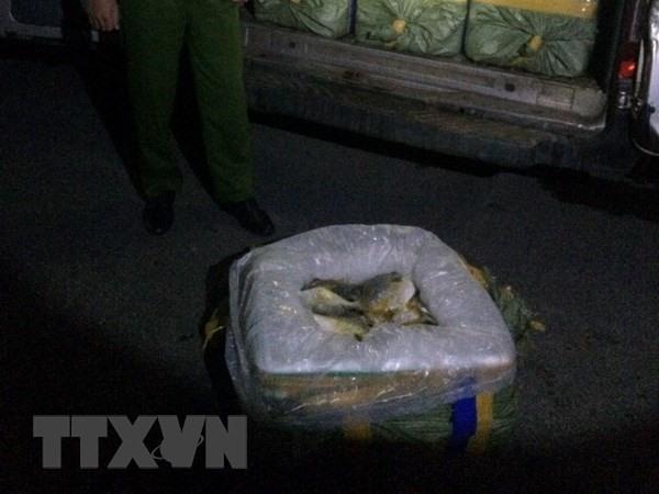 Quảng Ninh destroys 3.5 tonnes of fish