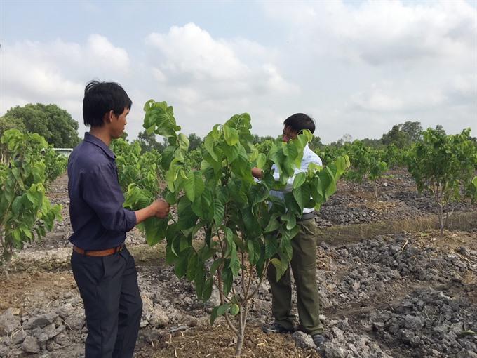 Fruit expansion plan continues
