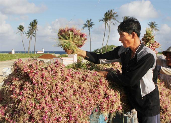 Lý Sơn island districts garlic onion farmers worried about white sand shortage