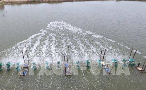 Trà Vinh to expand super-intensive shrimp farming