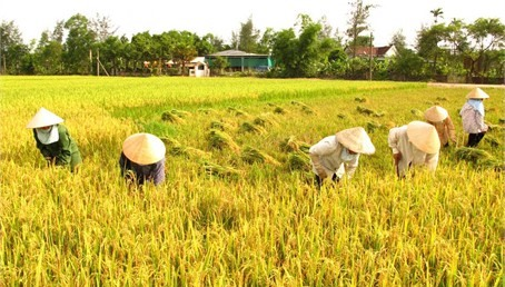 Only 2% cooperatives have access to loans