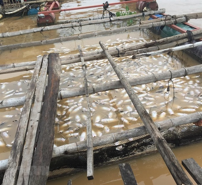 Pollution behind mass fish deaths incident
