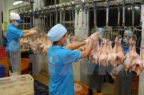 Khánh Hòa to set up slaughterhouse clusters