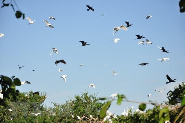 Largest stork garden of Bắc Giang Province in danger of elimination