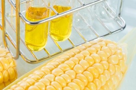 Sugar association seeks help against corn syrup imports