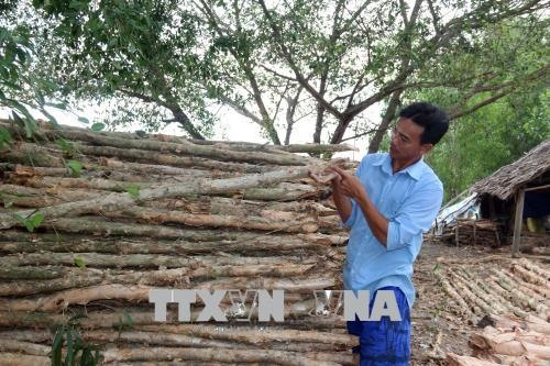 Kiên Giang households escape poverty by harvesting forest products