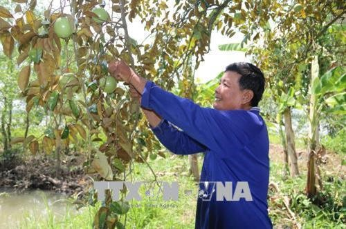 Tiền Giang expands fruit production as prices rise