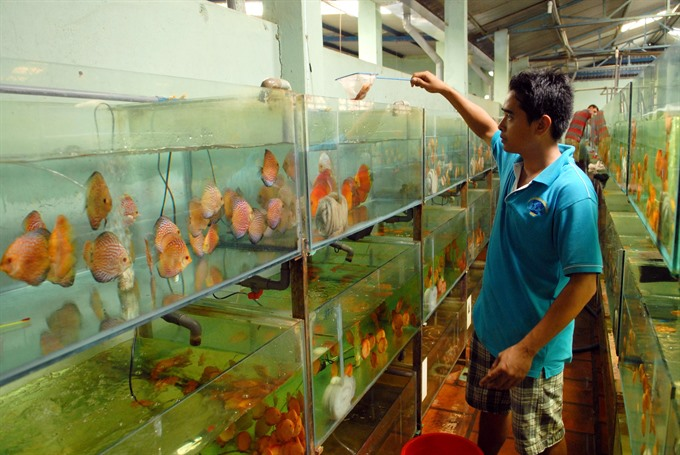 Ornamental fish production reaches higher standards