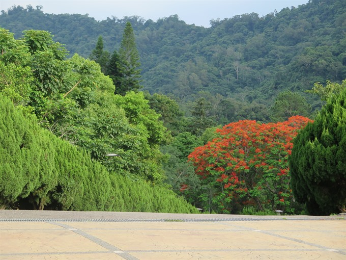 Forest chanting beauty lures tourists to central Taiwan