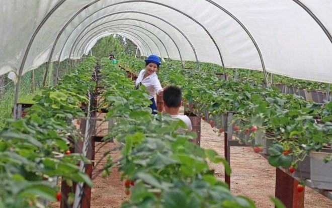 Agriculture firms struggle to get loans