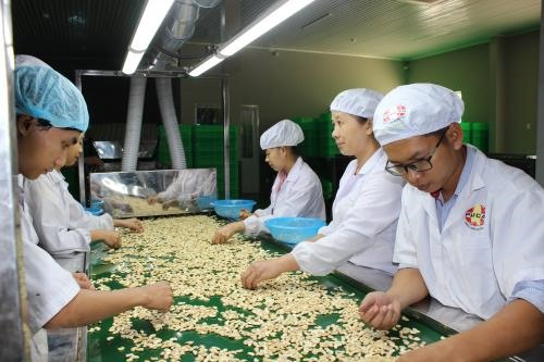 Cashew nut exports increase but processors face shortage of raw materials