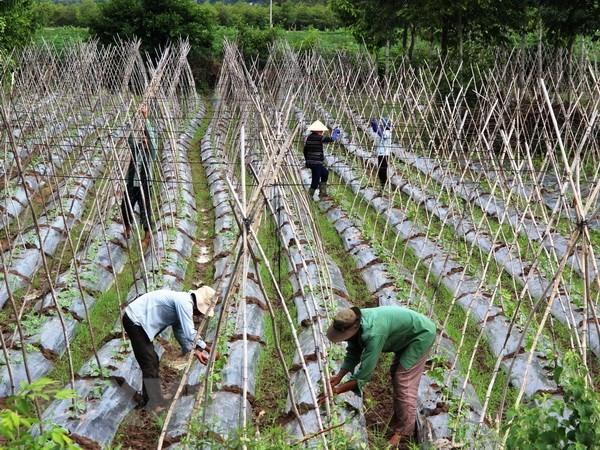 International assistance to enhance Việt food safety