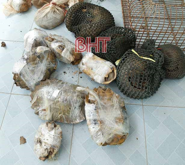 37 pangolins turtles found in bus from Laos