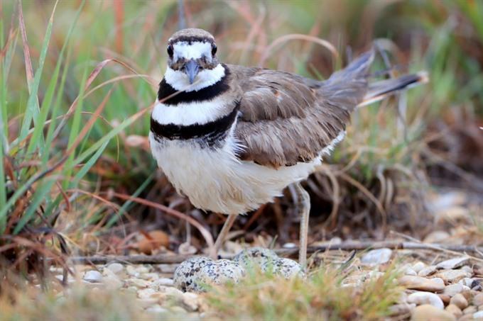 Birds nest almost upends major Canada music festival