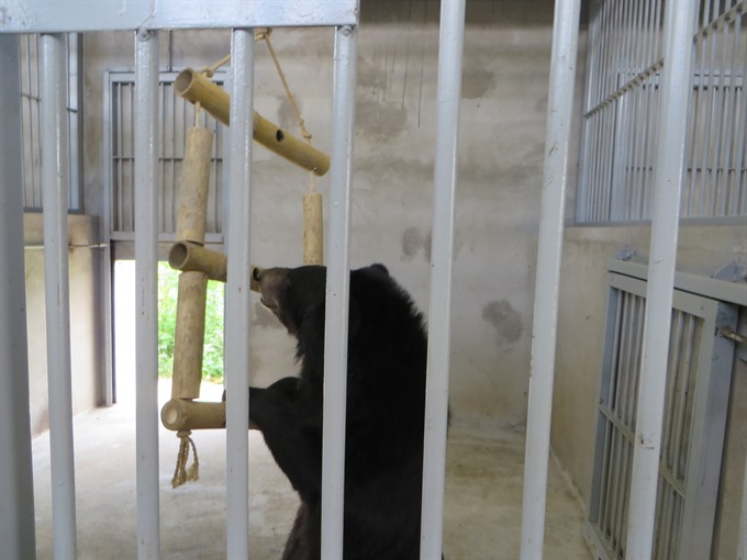 Owner gives up captive bears to sanctuary