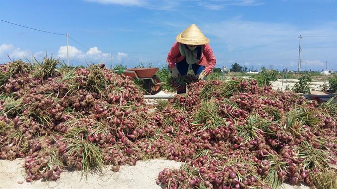 Lý Sơn Islands break Japan market