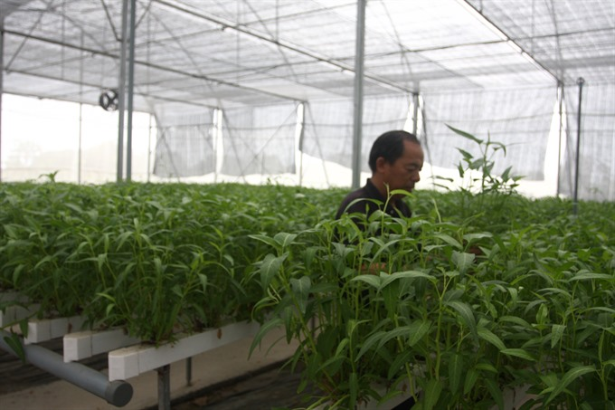 Organic farmers unable to make a clean break