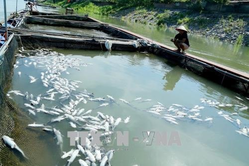 Hydropower plant water release kills fish in Phú Thọ