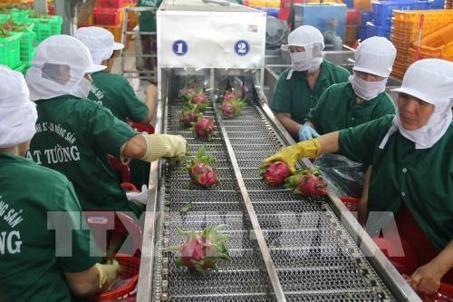 Tiền Giang sees significant growth in export turnover