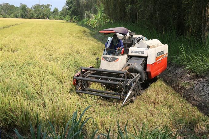 Summer-autumn rice harvest excellent in southern region