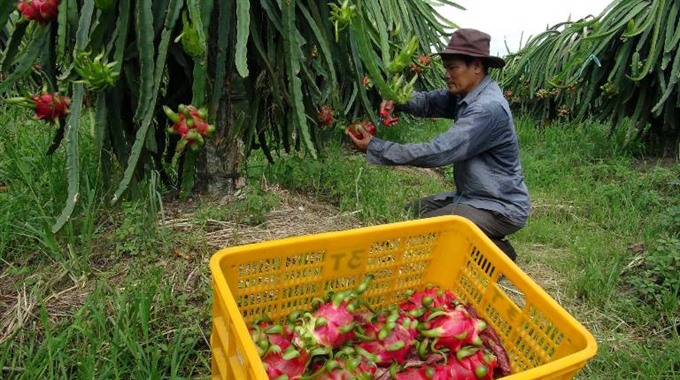 US continues to be key export market for Việt Nam