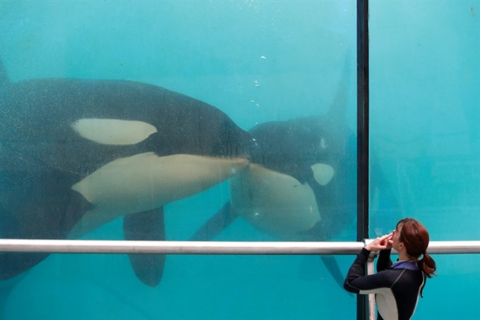 Thomas Cook drops SeaWorld holidays over animal welfare concerns