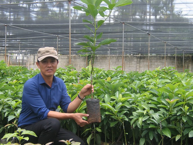 The King of Avocado brings the green to the Central Highlands