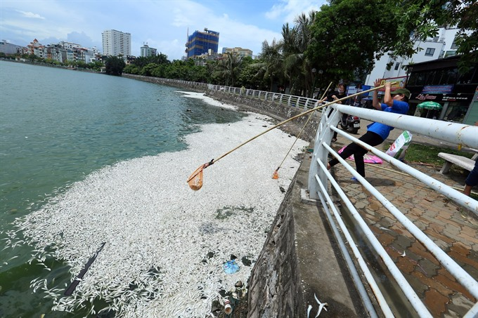 Hanois West Lake hit by another mass fish death