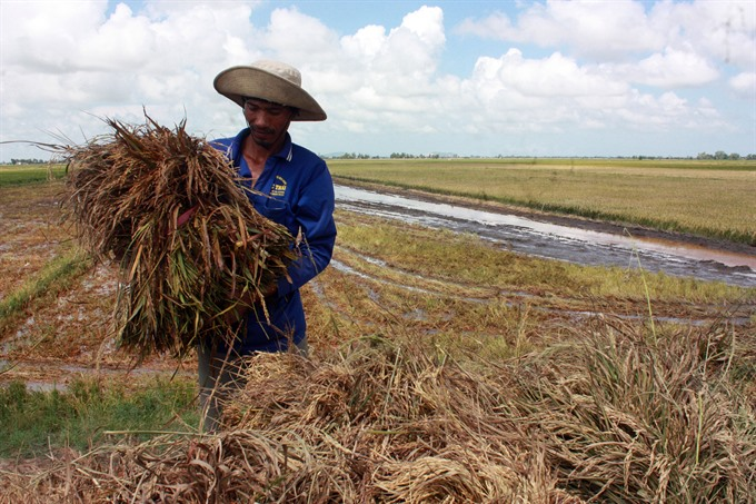 Provinces prepare for floods as water levels of rivers in Mekong Delta rise