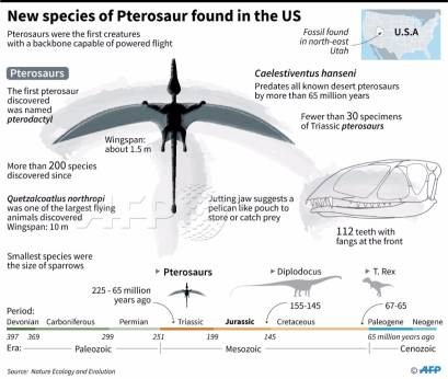200-million year old Pterosaur built for flying