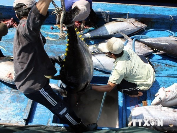 Tuna exports likely to hit 500m in 2018