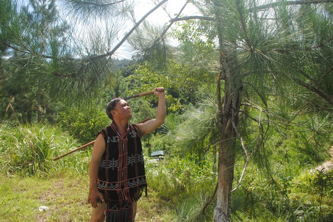Sustainable forestry to boost growth among ethnic groups