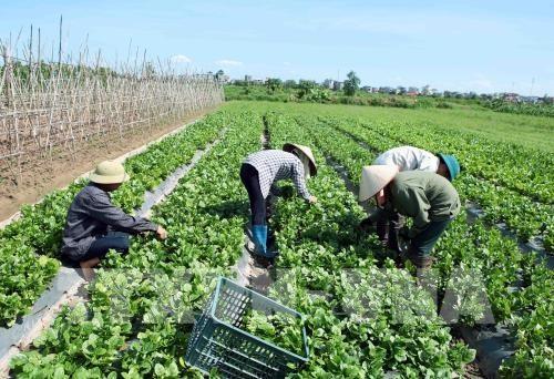 HCM City Farmers Association seeks to improve members lot