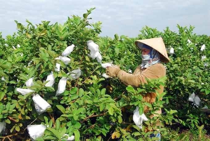 VN makes biotechnology progress
