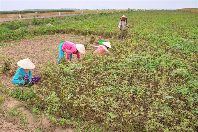Bình Thuận attempts to combat desertification
