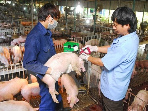 Vietnam takes action on African swine fever