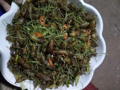 Biting into the bugs really is a must try dish for those who visit Sơn La