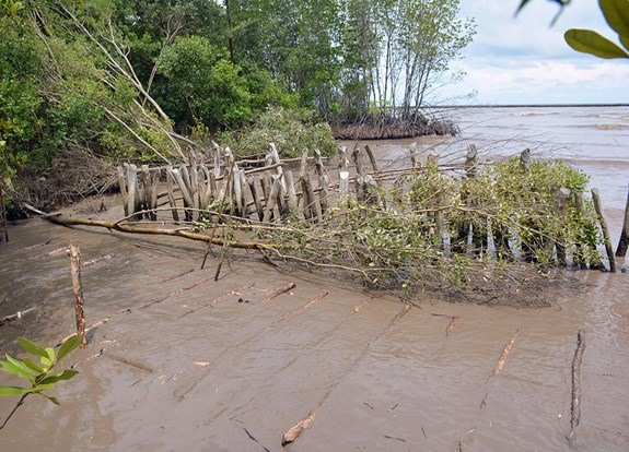 Mekong Delta provinces to combat coastal erosion and flood