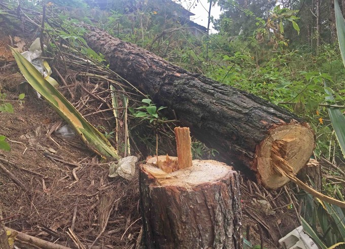 Firms flout obligation to protect forest