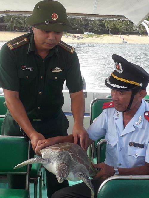Endangered sea turtle released in Đà Nẵng