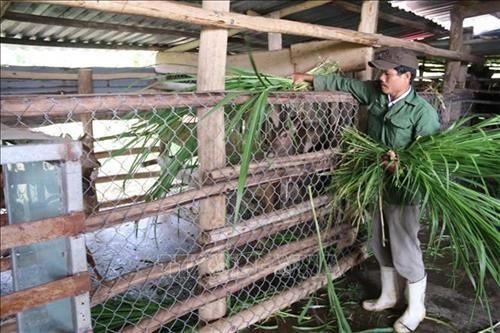 Deer farming lucrative in south