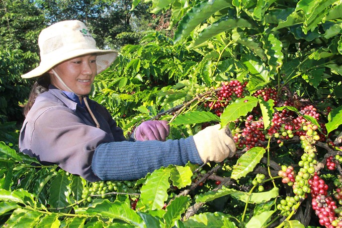 Coffee farmers fall short of tree replacement target