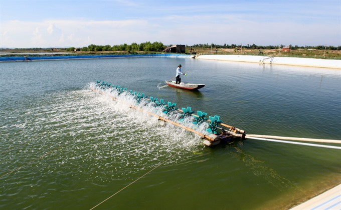 Waste from shrimp farms reduces yield