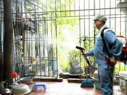 Mekong Delta region now in peak season for dengue fever