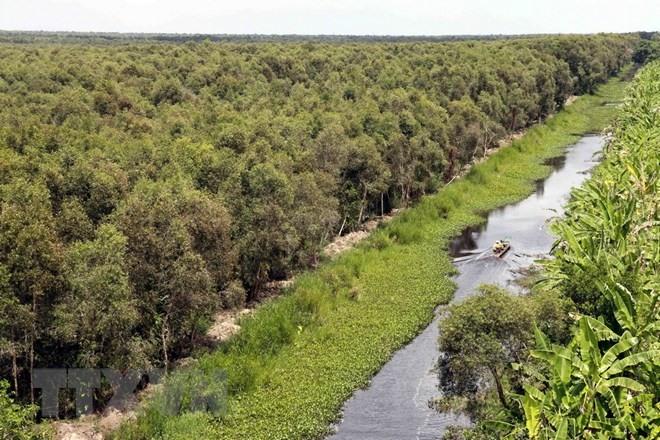 Cà Mau speeds up afforestation