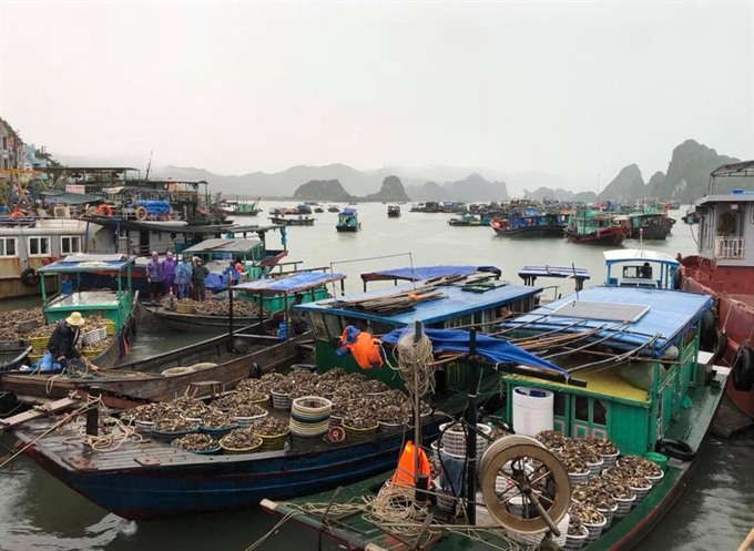 Vân Đồn District plans for the future