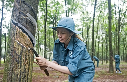 VN rubber production industry to be impacted due to US-China trade war
