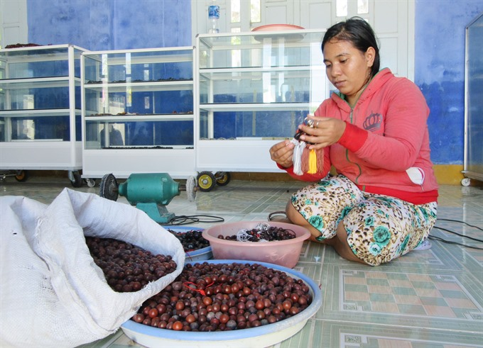 Ninh Thuận helps improve income of households that protect forests